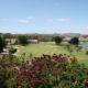 Mijas Golf Olivos Primavera